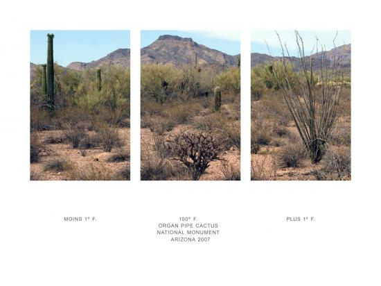 Organ Pipe Cactus, temperature